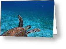 Out To Sea Greeting Card by Kimberly Mohlenhoff
