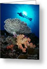 Palau, Diving Greeting Card by Dave Fleetham - Printscapes