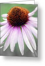 Pale Grey Greeting Card by Marty Koch