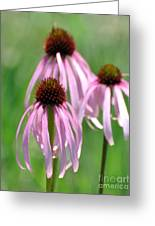 Pale Purple Greeting Card by Marty Koch