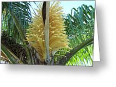 Palm In Bloom Greeting Card by Evelyn Patrick