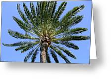 Palm Greeting Card by Mindy Newman