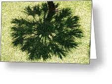Palm Shadow Greeting Card by Richard Mansfield