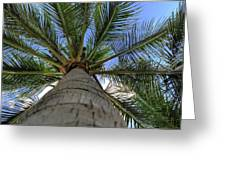 Palm Tree Greeting Card by Kelly Wade