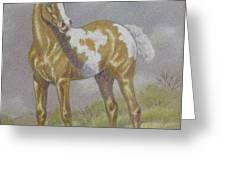 Palomino Paint Foal Greeting Card by Dorothy Coatsworth