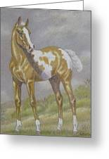 Palomino Paint Foal Greeting Card by Dorothy Coatsworth