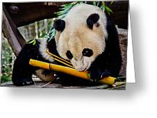 Panda Bear Greeting Card by Robert Bales