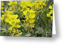 Panorama Hills Bluffs Bee Painting Greeting Card by Donna Munro
