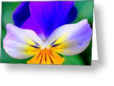 Pansy Greeting Card by Kathleen Struckle