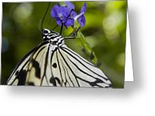 Paper Kite Butterfly Greeting Card by Heather Applegate