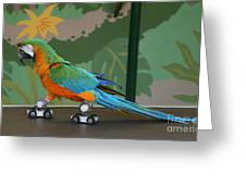 Parrot On Skates Greeting Card by Ruth Hallam