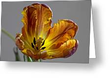 Parrot Tulip 22 Greeting Card by Robert Ullmann