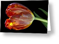 Parrot Tulip 6 Greeting Card by Robert Ullmann