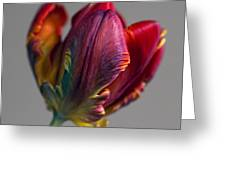 Parrot Tulips 15 Greeting Card by Robert Ullmann