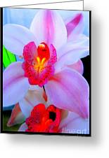 Pastel Pagentry Greeting Card by Clayton Bruster