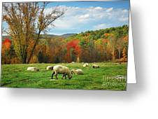 Pasture - New England Fall Landscape Sheep Greeting Card by Jon Holiday