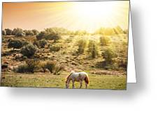 Pasturing Horse Greeting Card by Carlos Caetano