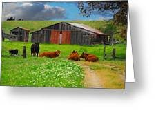 Peaceful Cows Greeting Card by Harry Spitz
