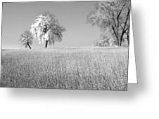 Peaceful Greeting Card by James Steele