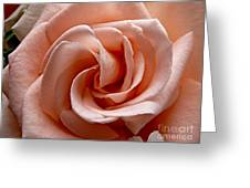 Peach-colored Rose Greeting Card by Sean Griffin