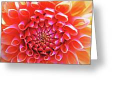 Peachy Dahlia Greeting Card by Kathy Yates