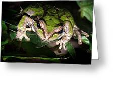 Peek a Boo Pacific Tree Frog Greeting Card by Nick Gustafson