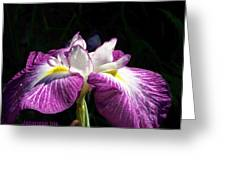 Perfect Pose Greeting Card by Sandy Collier