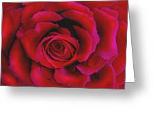 Perfect Rose Greeting Card by Joel Payne