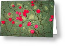 Petals On Asphalt Greeting Card by Anna Villarreal Garbis