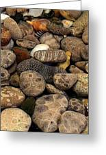 Petoskey Stones With Shells L Greeting Card by Michelle Calkins