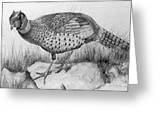 Pheasant In The Wild Greeting Card by Roy Anthony Kaelin