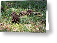 Pine Cones Greeting Card by Evelyn Patrick