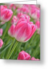 Pink And Green Greeting Card by Lyle  Huisken