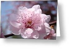 Pink Blossom Nature Art Prints 34 Tree Blossoms Spring Nature Art Greeting Card by Baslee Troutman