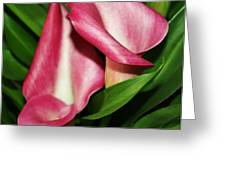 Pink Calla Lillys Greeting Card by Cathie Tyler