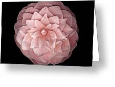 Pink Camellia Greeting Card by Richard Wilhelm