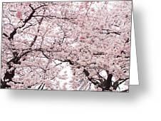 Pink Cherry Blossom Tree Greeting Card by Ariane Moshayedi