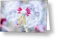 Pink Dandelion Greeting Card by Parker Cunningham