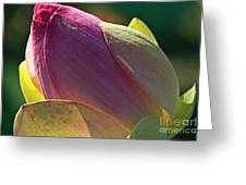 Pink Lotus Bud Greeting Card by Heiko Koehrer-Wagner