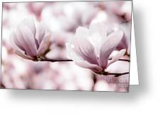Pink Magnolia Greeting Card by Elena Elisseeva