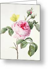 Pink Rose With Buds And A Brimstone Butterfly Greeting Card by Louise DOrleans