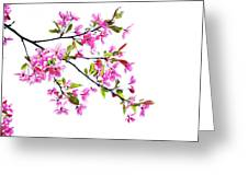 Pink Spring Greeting Card by Marilyn Hunt