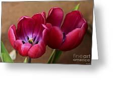 Pink Tulip Pair Greeting Card by Deborah Benoit