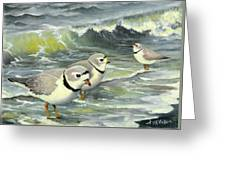 Piping Plovers At The Shore Greeting Card by Tara Milliken