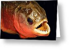 Piranha Greeting Card by Larry Linton