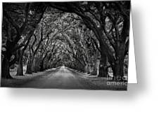 Plantation Oak Alley Greeting Card by Perry Webster