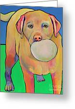 Play With Me Greeting Card by Pat Saunders-White