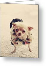 Please Meet Zoe Greeting Card by Laurie Search