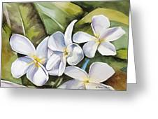Plumeria II Greeting Card by Han Choi - Printscapes