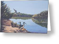 Point Clare Reflections 1 Greeting Card by Murray McLeod